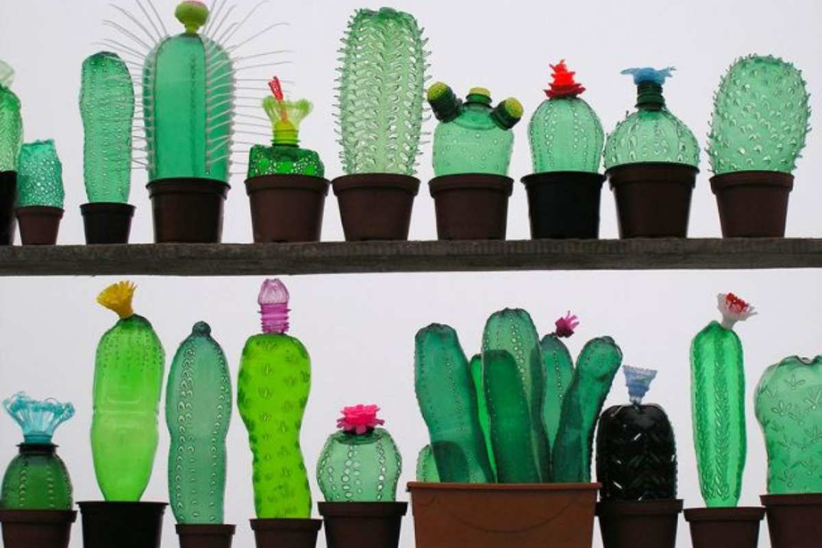 Pet cactus inspiration tresxics.com